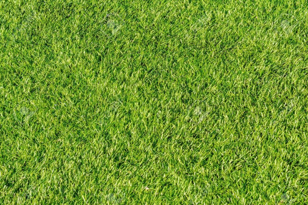Synthetic-grass-Tampa Bay FL Outdoor Living & Designs-We offer Landscape Design, Outdoor Patios & Pergolas, Outdoor Living Spaces, Stonescapes, Residential & Commercial Landscaping, Irrigation Installation & Repairs, Drainage Systems, Landscape Lighting, Outdoor Living Spaces, Tree Service, Lawn Service, and more.